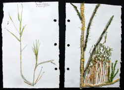 Grass in the Wetlands – Point Judith