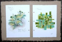 Spring on Ploughshares Farm – Broccoli