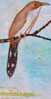 The Cuckoo is a Pretty Bird - Appalachian Songbook Series, detail